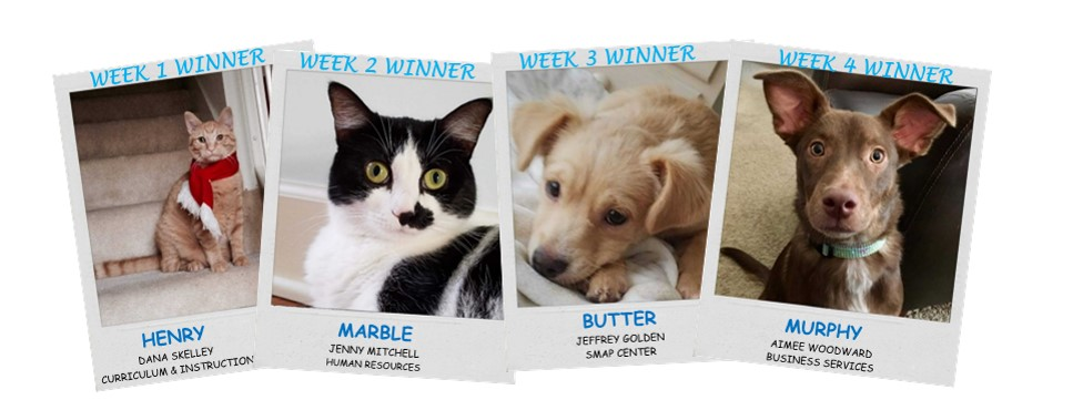 cutest pet weekly winners