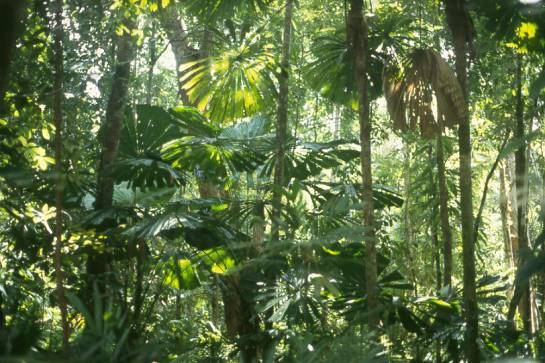 rainforest2